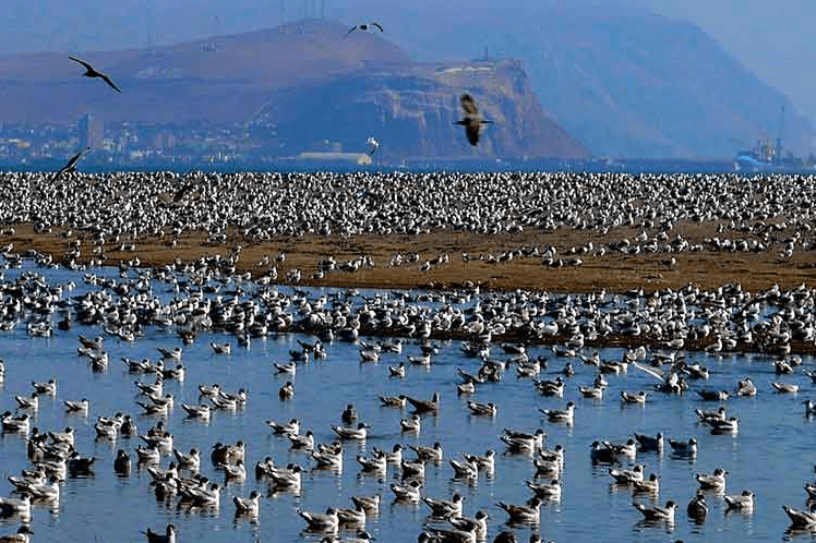 Proyecto que amplía carretera en Arica amenaza al humedal de Lluta