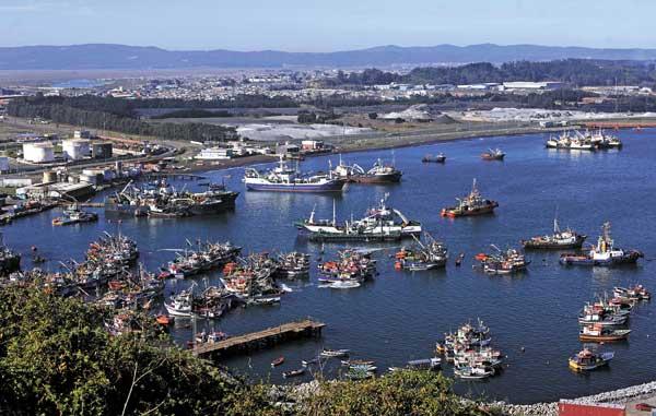 Pescadores industriales del Biobío en pie de guerra por proyecto de ley que regula la captura de la jibia