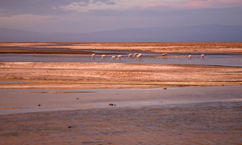 SQM reconoce nueva falla en Salar de Atacama por eventual sobreextracción de salmuera
