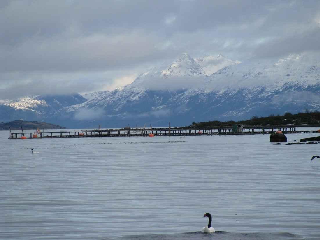 Puerto Natales tendrá un muelle flotante para dar servicios a salmoneras