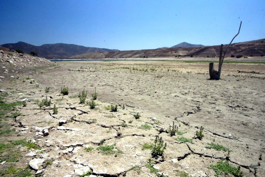 Conoce cómo los bosques aportan al control de la erosión y la sequía