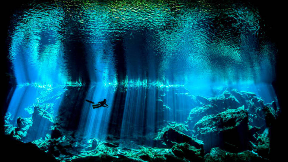 Día Mundial de los Océanos: una lucha por evitar el colapso de los pulmones del planeta