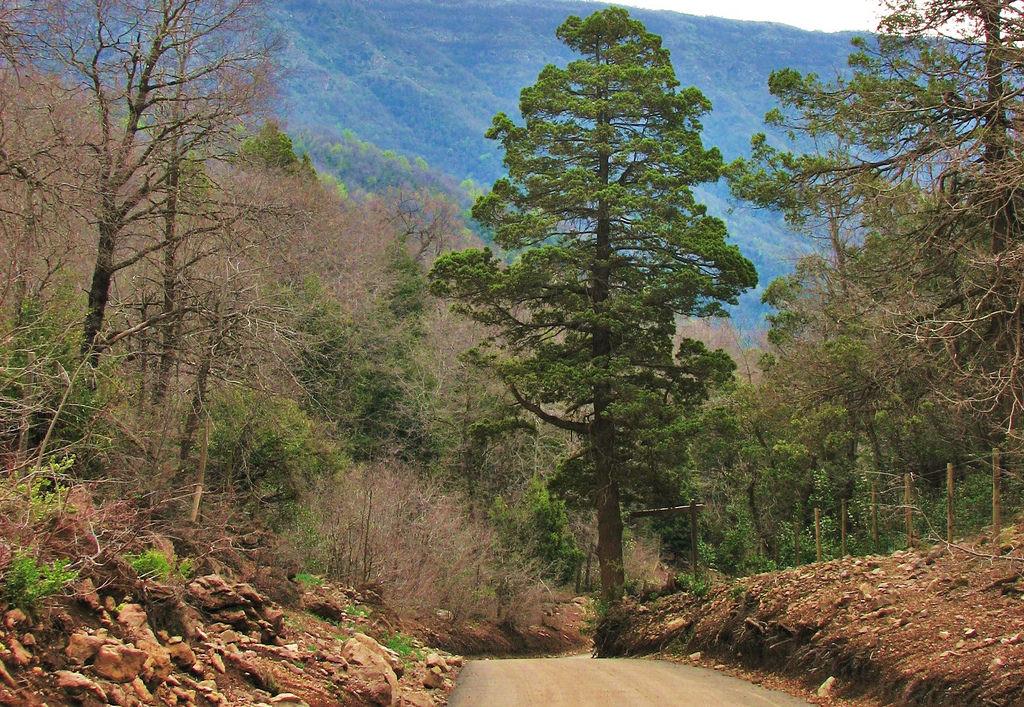 Organizaciones cuestionan suspensión de proceso de clasificación de especies silvestres
