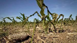 ONU: Día Mundial de Lucha contra la Desertificación y la Sequía