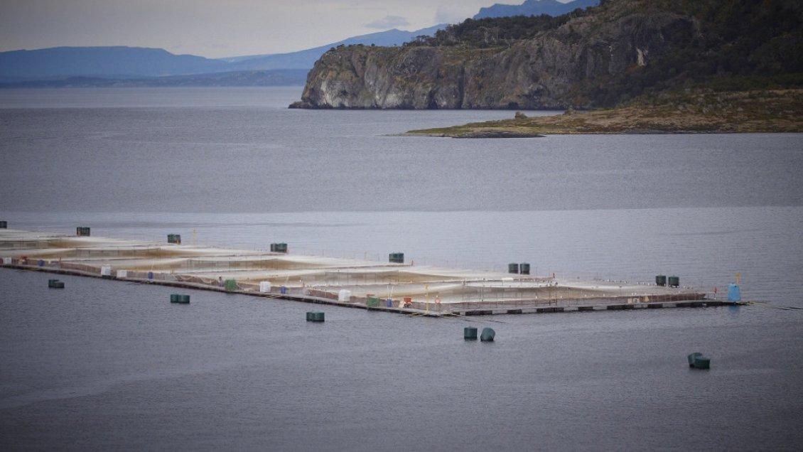 Impacto por fuga de 690 mil salmones en Calbuco llega a la prensa internacional