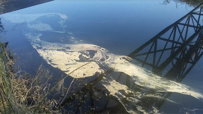 Municipio de Quintero analiza acciones legales por último derrame de petróleo ocurrido en estero