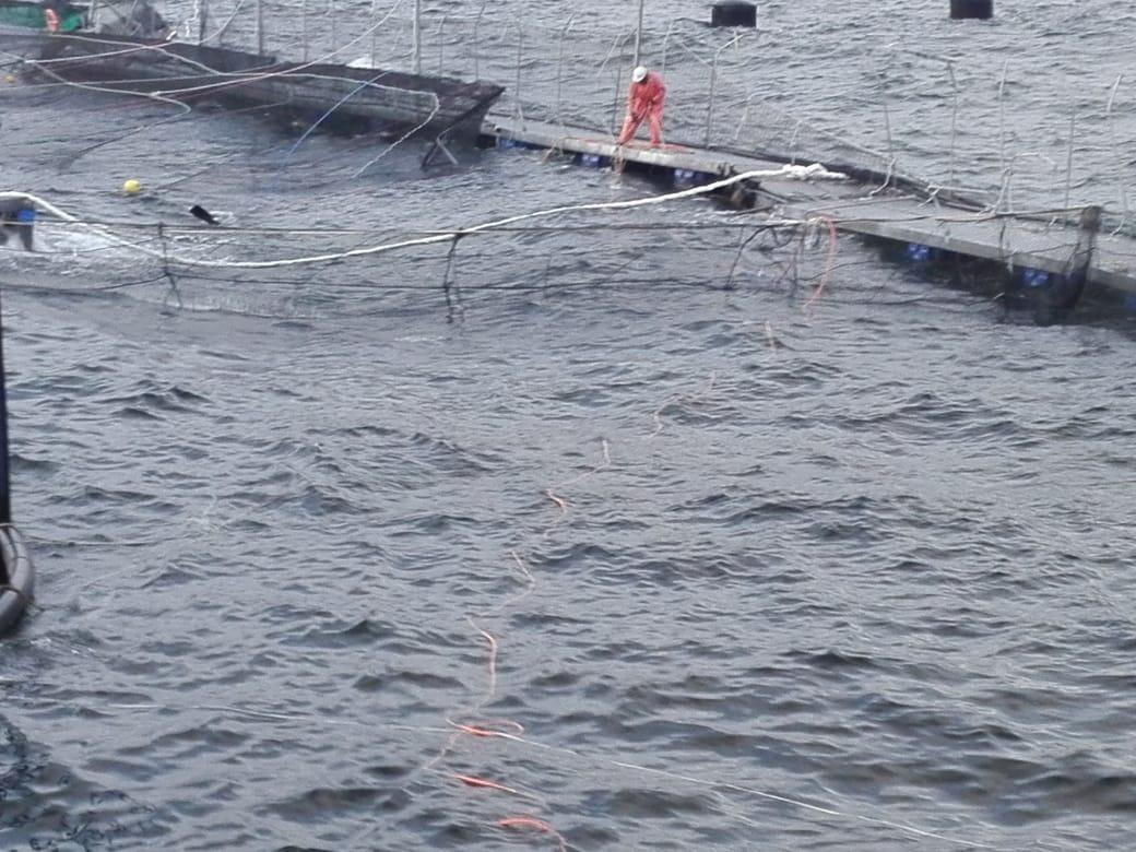 SMA da 10 días de plazo a Marine Harvest para notificar plan de contingencia tras fuga de peces