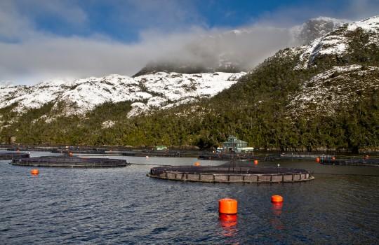 Ingresan nuevo proyecto acuícola por dos millones de dólares en aguas de Río Verde