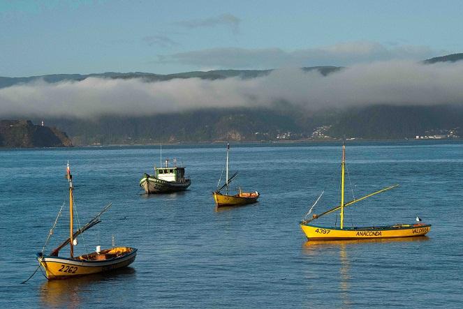 Balance de Sernapesca deja multas y sanciones en la Región del Biobío