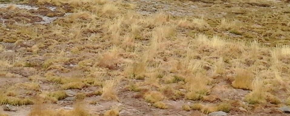 Acusan a empresa minera de secar humedales en la cordillera de Atacama