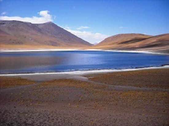 Extremófilos: el tesoro que esconden las lagunas en San Pedro Atacama