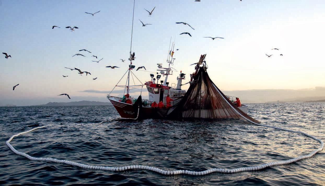 Estudio FAO prevé que Chile aumentará un 56% la exportación pesquera al 2030