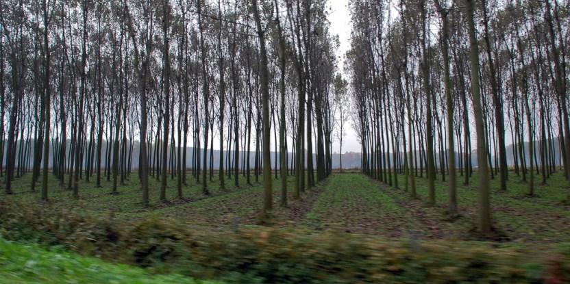 Iniciativa MAPA de Celulosa Arauco: el regreso de los megaproyectos