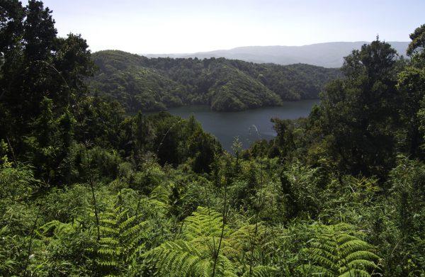 Retiran Estudio Ambiental por proyecto de parque eólico en Selva Valdiviana