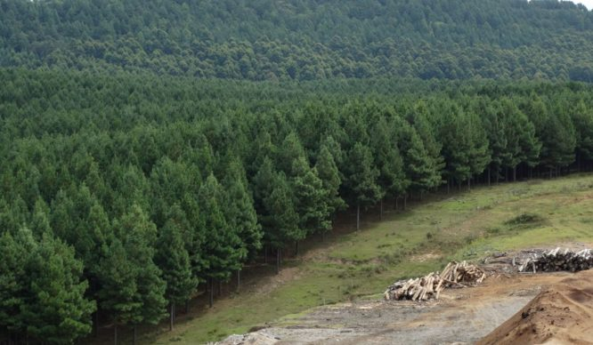 Rubro forestal pedirá cambio a norma sísmica para duplicar uso de madera en edificios