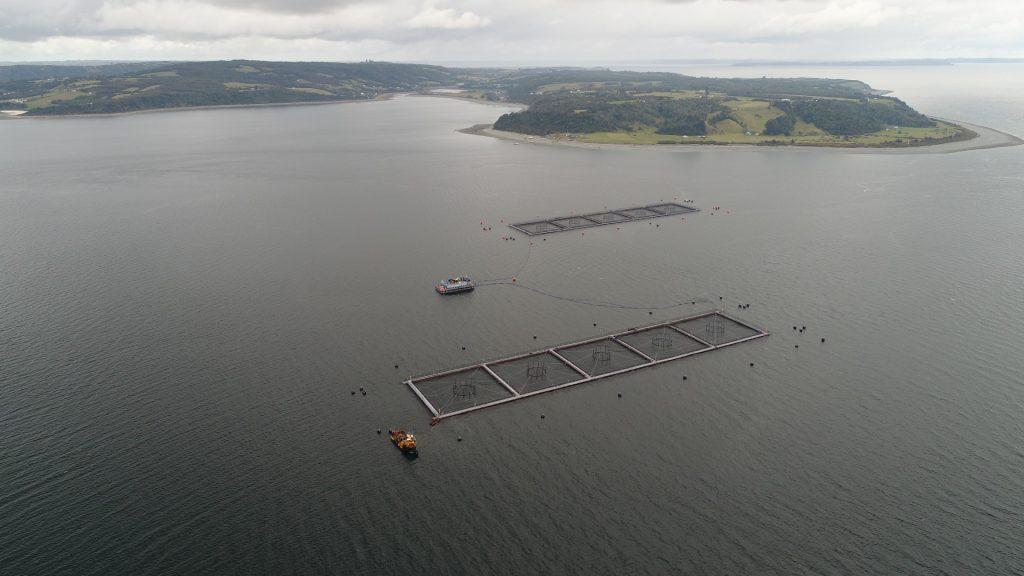 Fuga de salmones: Marine Harvest podría perder concesión del centro de cultivo de Calbuco
