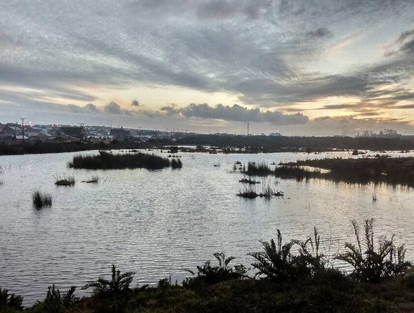 Corte Suprema ordena trasladar colegio en Puerto Montt por daños a humedal