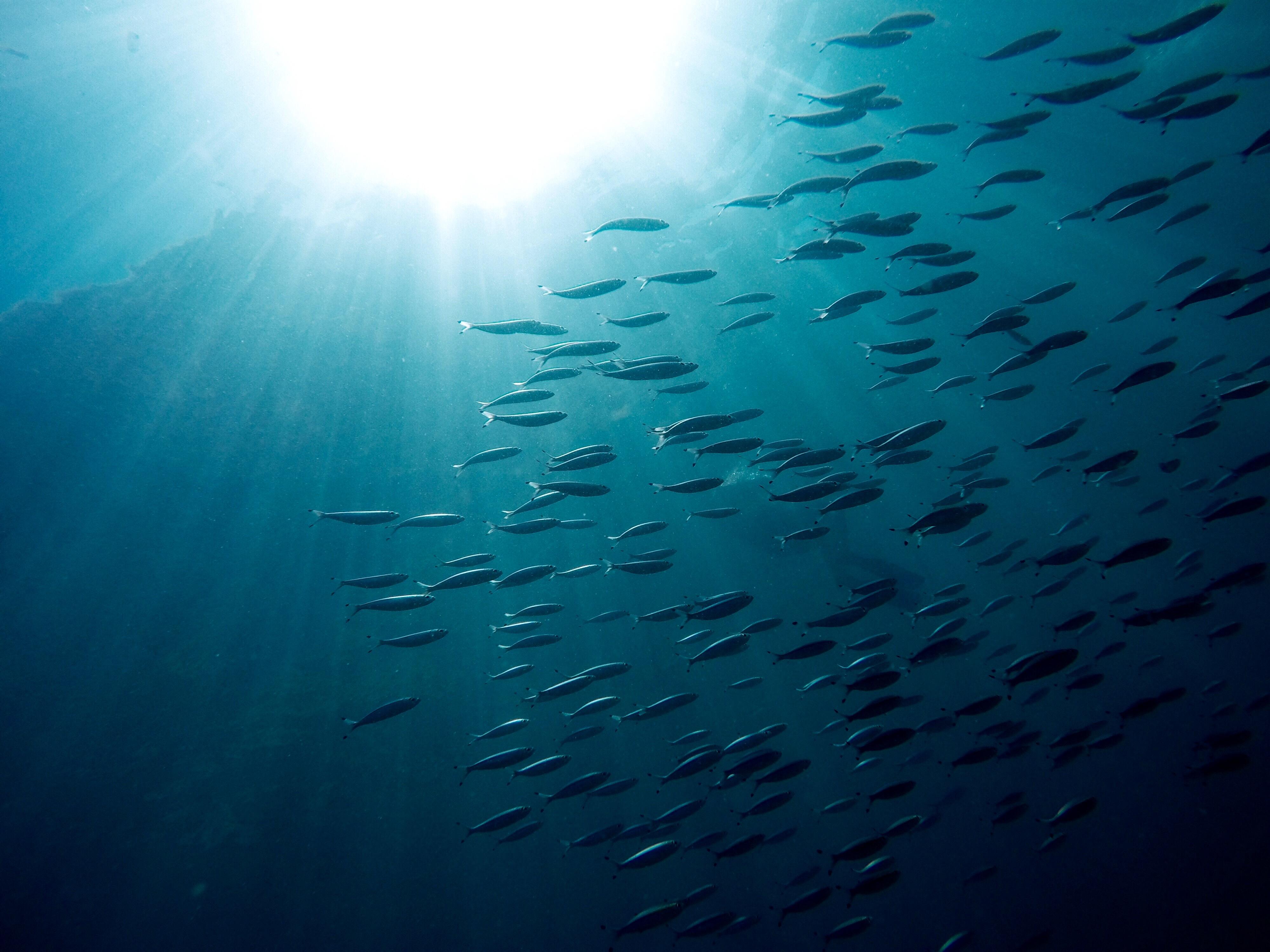 Solo un 13 por ciento de los océanos del planeta permanece virgen