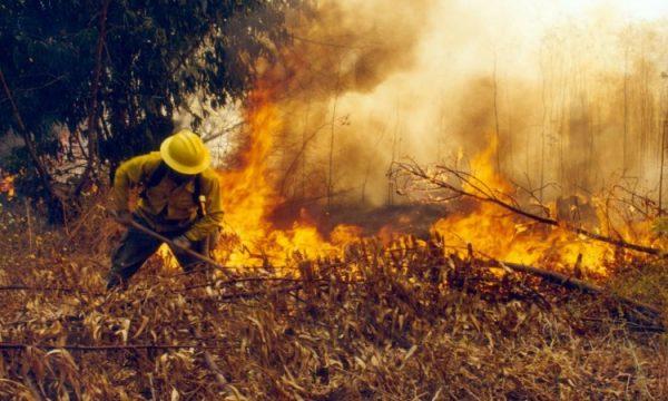 Incendios forestales arrasan más de 2 mil hectáreas a lo largo del país