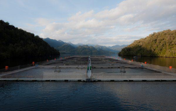 Ley de Pesca: estudian posibilidad de remover sedimentos en concesiones acuícolas