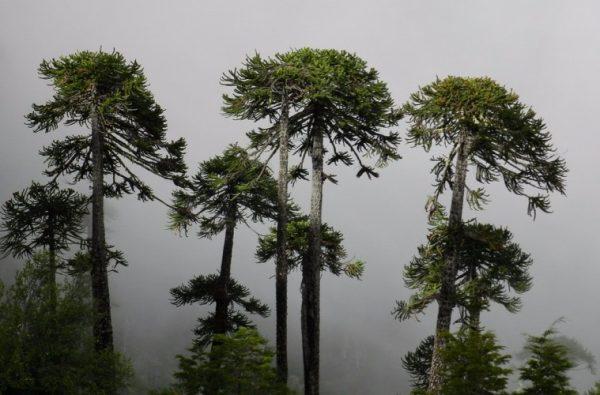 Los desafíos ambientales que enfrentará Chile previo a ser sede de la COP25