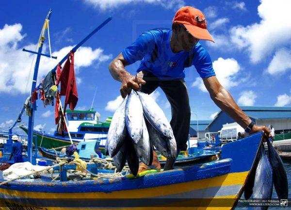 Hoy se vota nulidad de la Ley de Pesca