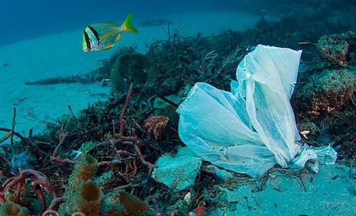 Chilenos aprueban restricción de bolsas plásticas, pero reciclan poco