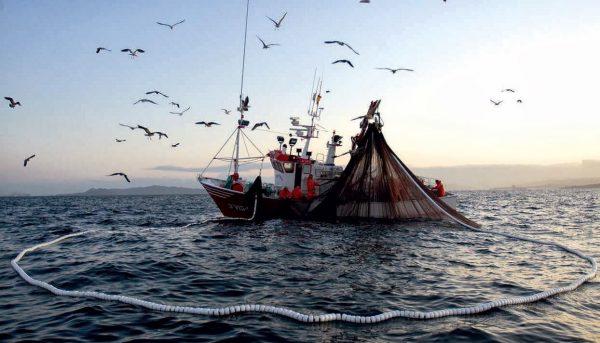 Proyecto que prohíbe pesca de arrastre en la jibia está a un paso de convertirse en ley