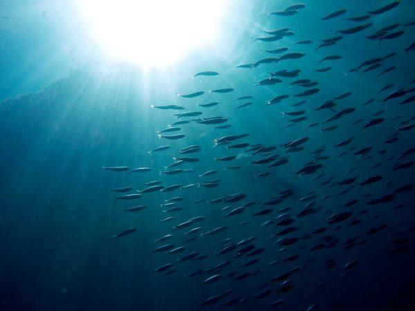 De cara a la COP25, Gobierno planifica nueva política oceánica