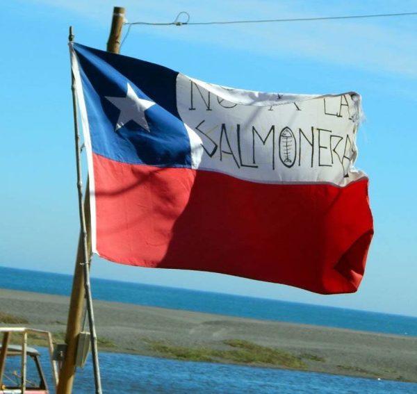 Rechazo unánime a segundo proyecto salmonero de Pelícano en la costa de Ñuble