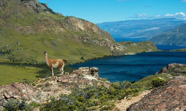 Chile llega a 21% de su territorio convertido en parques y reservas