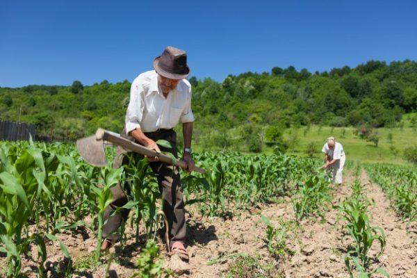 Gobierno ingresó proyecto que actualiza la legislación relativa al uso de fertilizantes