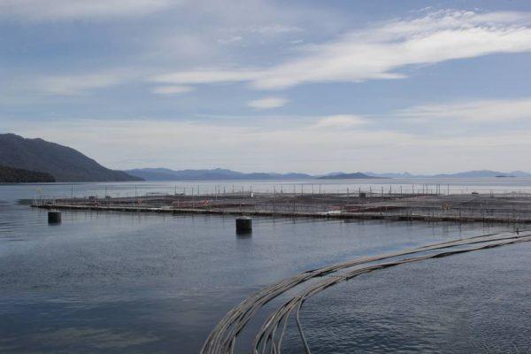 Sernapesca detecta mortalidad en centro de cultivo de Australis en Magallanes