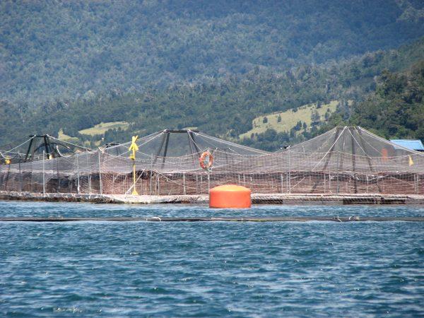 Aprueban legislar para exigir la remoción de sedimentos en concesiones de acuicultura