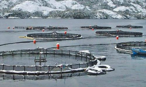 Sernapesca solicita activar plan de contingencia por posible escape de salmones