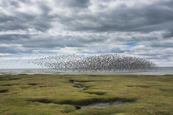 Punta Arenas: Humedal Bahía Lomas fue declarado Santuario de la Naturaleza