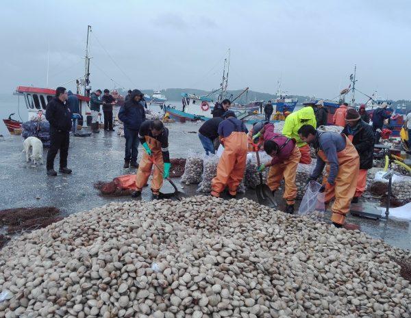 Decretan prohibición de extracción de recursos marinos en sur de Chiloé por presencia de marea roja