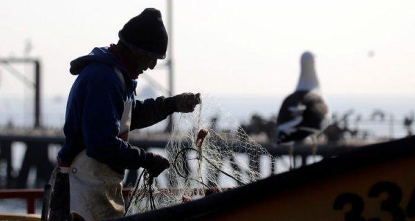Comité Científico alega no ser parte en propuesta de ley que regula captura de jibia y critica veto