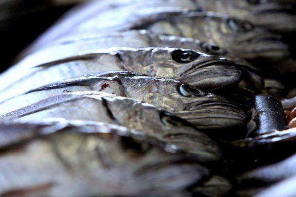 Subsecretaría de Pesca ingresa a FNE datos de denuncia por eventual colusión