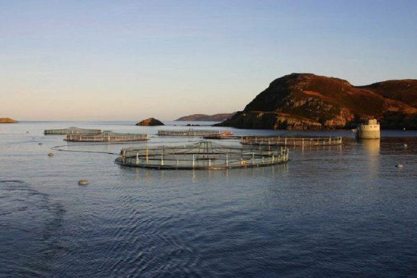 ¿Por qué se cuestiona que Noruega siga trayendo salmoneras a nuestro territorio?