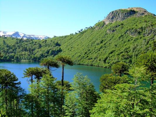 Anuncian priorización de tres parques nacionales de La Araucanía