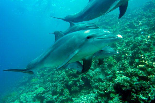 Comisión de Medio Ambiente anuncia proyecto de ley que proteja a cetáceos tras matanza de delfines en Mejillones