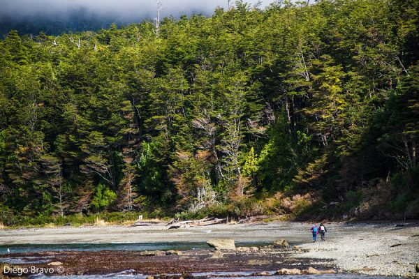 Inédito proyecto de 50 científicos analizó más de 1.000 estudios de Patagonia chilena para mejorar su conservación