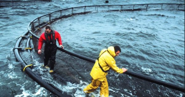 Visita de reyes noruegos desata la Guerra Fría de los salmones en Magallanes