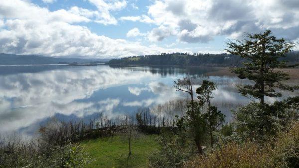 Humedales de Valdivia generan diferencia entre ambientalistas y dueños de terrenos