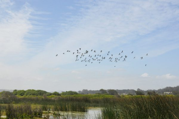 Solo tres comunas poseen ordenanzas para proteger los humedales