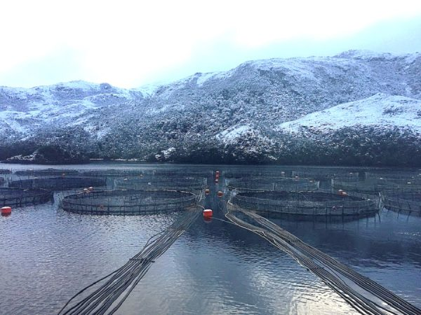 La industria salmonera pretende ampliar sus operaciones a Magallanes