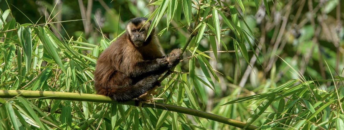 Mono América Latina